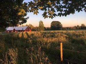 Bilder från byn