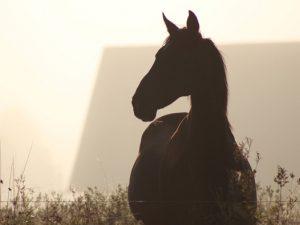 En riktig hästby